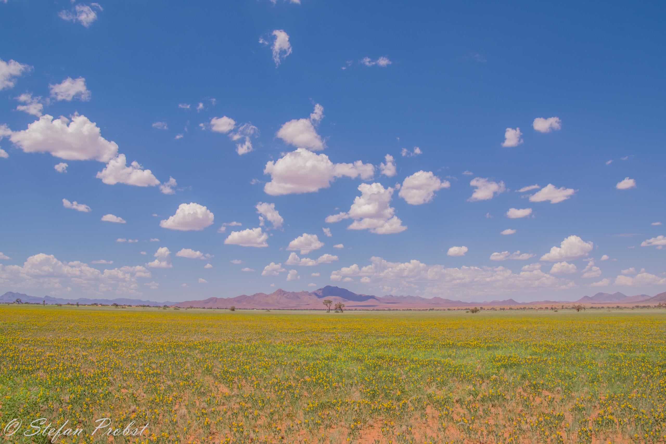 Green Namib