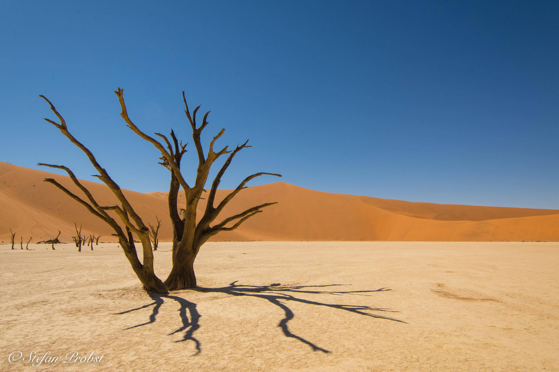 Namibia - Namib - Sossusvlei - Death Vlei - Toter Baum