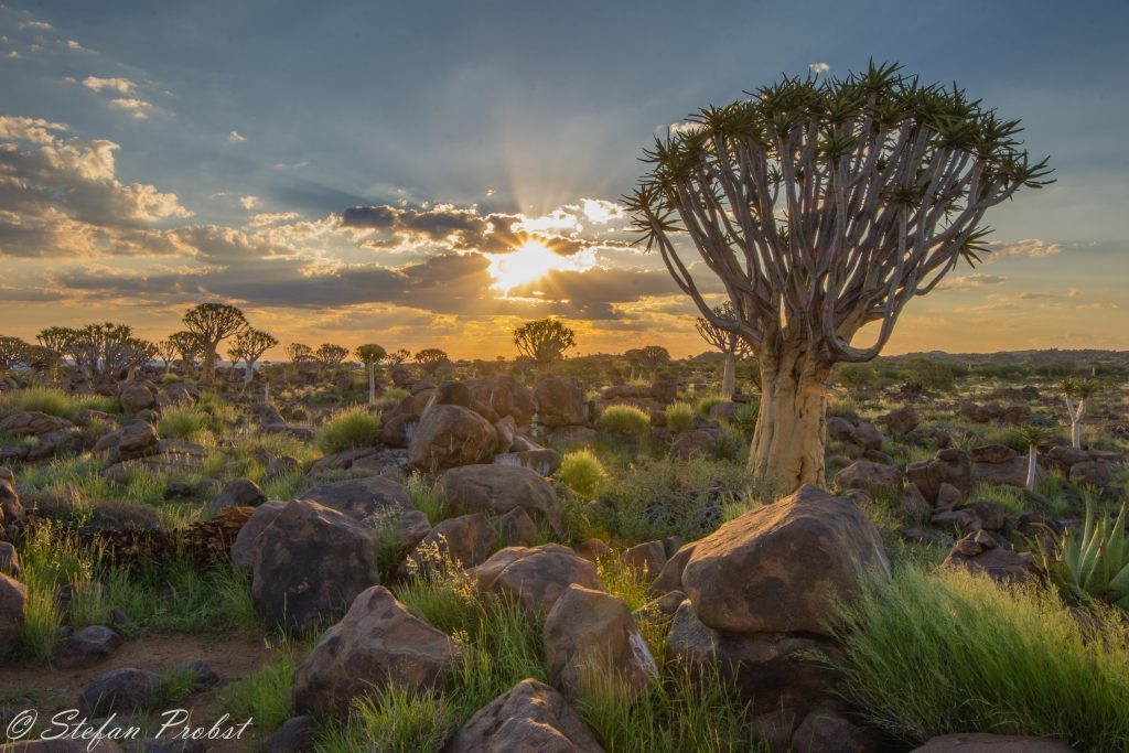 Namibia - Quivertree Forest Keetmanshoop