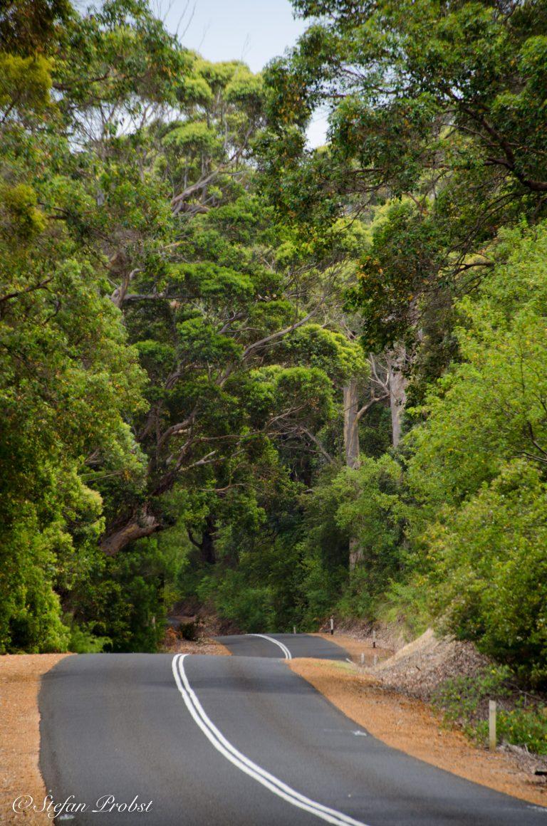 Straße durch einen Eukalyptuswald bei Albany