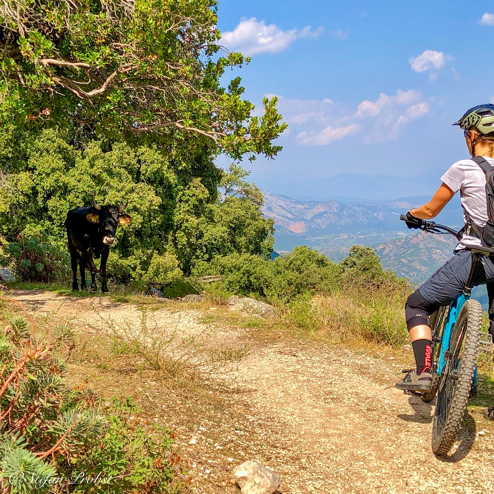 Mountainbiken auf Sardinien - Vorsicht auf dem Trail